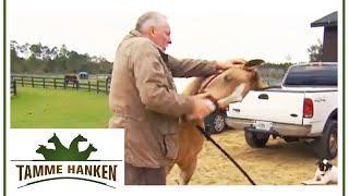 Mit Hand, Herz und Wissen - Eingeklemmter Nerv: Stute Lucky hat Probleme im Hals | Tamme Hanken | Ka