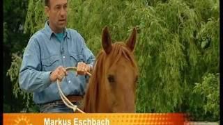 """Für Pferde-Freunde !  Das Tier, Dein Partner / Reiten ohne Sattel und Zaumzeug"""""""