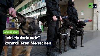 """Corona-Krise: """"Molekularhunde"""" kontrollieren Menschen"""