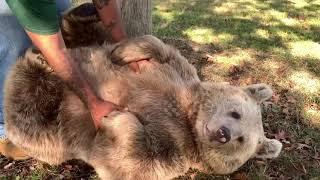 Freudvolles Wiedersehen - Johnathan trifft sein dickes Bärenmädchen wieder