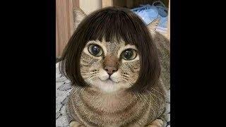 unglaubliche Aufnahmen von Katzen