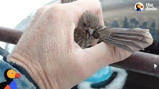 Vögelchen ist festgefroren an Metallstange - Hilfe naht