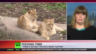 Feed our lions with your unwanted pets – Danish zoos to visitors