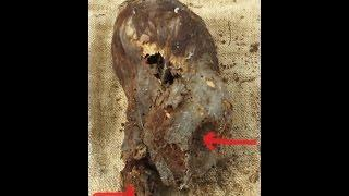 Astonishing Newborn Baby Elongated Skull Of Paracas Peru