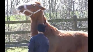 Gewalt und sexueller Missbrauch aus der Kindheit zeigt sich im Umgang mit Pferden deutlich