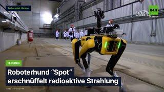 Roboter erschnüffelt radioaktive Strahlung
