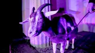 Sehr aufschlussreich - Antilopen Gang - Das Trojanische Pferd