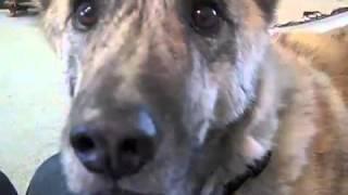 """Sprechender Hund"""