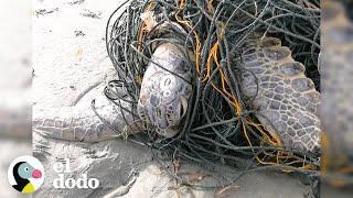 Immer mehr Fisch für immer mehr Menschen - Die Meeresbewohner sind die Verlierer
