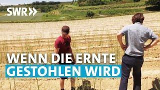 Diebe ernten Felder ab | SWR Zur Sache! Baden-Württemberg