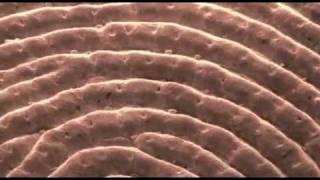 Mikrokosmos - Nanotechnologie - Intelligenz - Strategien