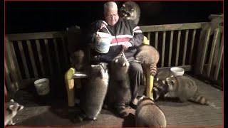 Die maskierten Räuber kommen - Monday Night - Raccoons try whipped cream