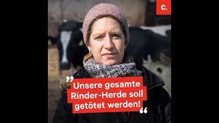 Rettet die Rinder! Werbung fürs Impfen mit Tränendrüsenfaktor