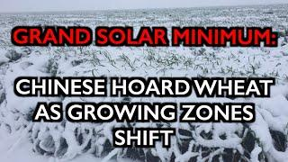 GRAND SOLAR MINIMUM: Chinese HOARD Grains after Cold Kills Wheat - Growing Zones Shifting!