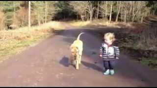 Hund führt Kleinkind aus ;-)