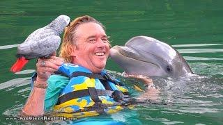 """""""Lucky"""" the PARROT meets """"Venus"""" the DOLPHIN!  In British Virgin Islands, Caribbean"""