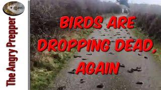 Birds Are Dropping Dead