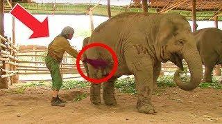 Traumatisierter Elefant - Liebe heilt die Seele