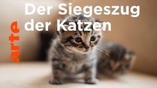 Wie die Katze die Welt eroberte - ARTE Doku