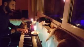 """Tierschützer spielt seinen Katzen auf dem Klavier was vor""""Quiet and Alone Night"""""""