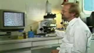 Deutsche Wissenschaftler widerlegen die Evolutionstheorie - Teil 2