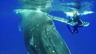 Wal bedrängt Taucherin - Unglaubliche Begegnungen im Meer