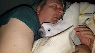 Papagei will beim Papa schlafen