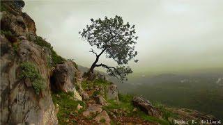 Seelennahrung / Wundervolle Musik mit sensationellen Naturfotos !