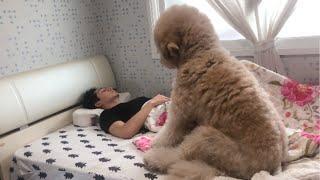 Hund Alf - Mit Papa kuscheln am Morgen ist toll