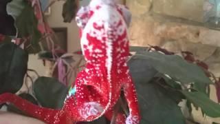 Reptiloider will Menschen fressen           ☺
