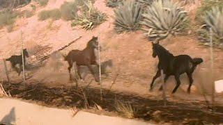 Pferd rettet seine Familie vor dem Feuer in Kalifornien