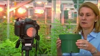 Vernetzte Pflanzenwelt - Wie Pflanzen kommunizieren