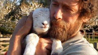 Tiere haben Gefühle und eine Seele