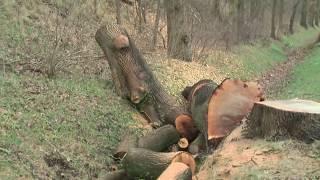 Vernichtung der Alleen & Gehölze in Mecklenburg-Vorpommern Landkreis Ludwigslust Parchim 2020
