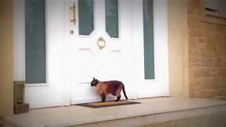 Katze klopft an