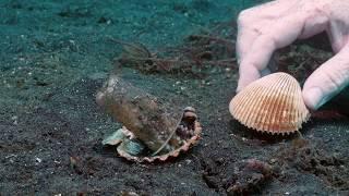 Kleiner Octopus bekommt eine bessere Behausung geschenkt
