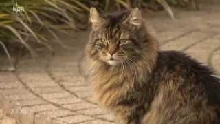 Realer Irrsinn: Illegale Bewohner in Burgwedel - extra 3 | NDR