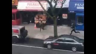 Die Welt ist ein Irrenhaus - Polizisten verfolgen nackten Mann in NewYork