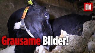 Tierquälerei im Allgäu - Mitten in Deutschland - in einem zivilisierten Land